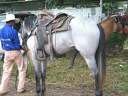 Konji_odmaraju.jpg