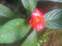 Cvijet_nalik_usnama.jpg