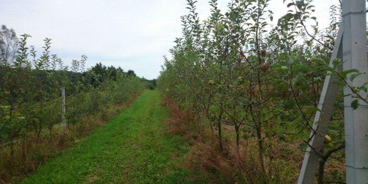 DSC_0375_01_Kolarec_Gornja_Rijeka_plantaza_jabuke_kradja_pesticidi
