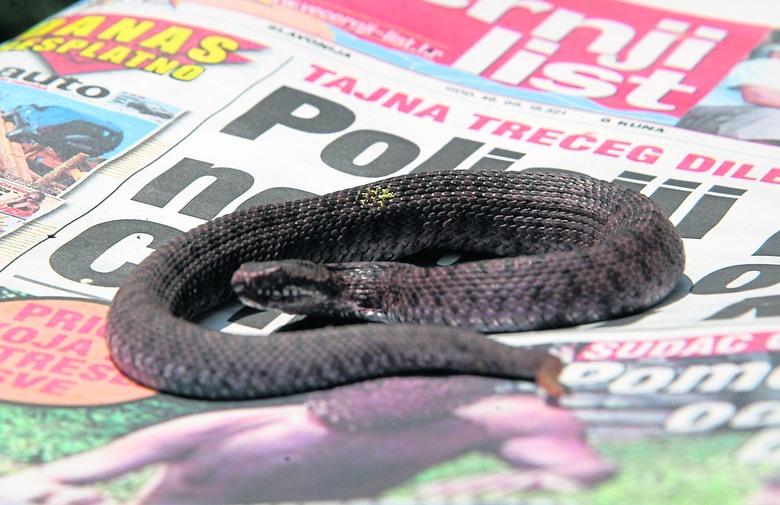 Šef križevačkog SDP-a dobio zmiju u kuverti