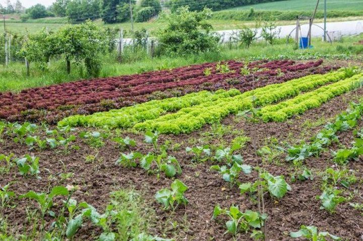 ili18_OPG_Ilicic_biodinamicka_poljoprivreda