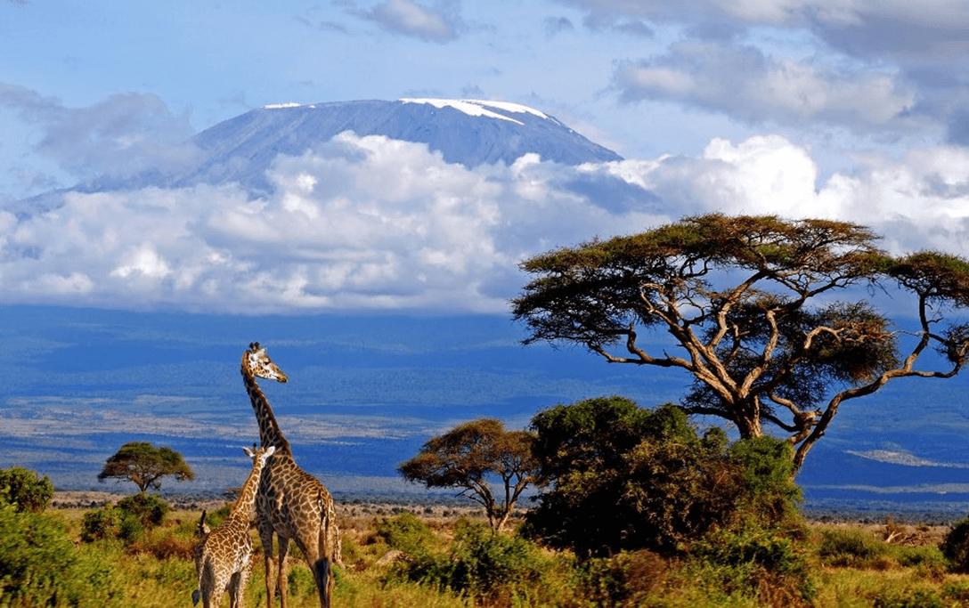 """PLANINARSKO DRUŠTVO """"KALNIK"""" KRIŽEVCI poziva svoje članove i sve zainteresirane građane na PREDAVANJE: Kilimanjaro"""